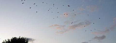 lonbirds.jpg