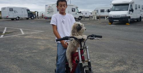 frairedogbike