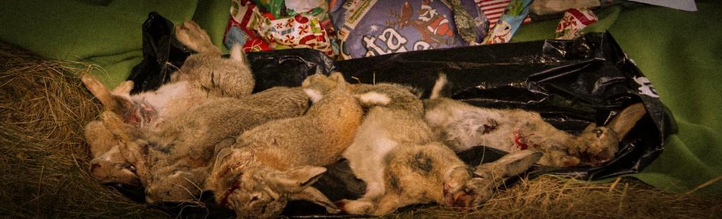 santa brings bunnies